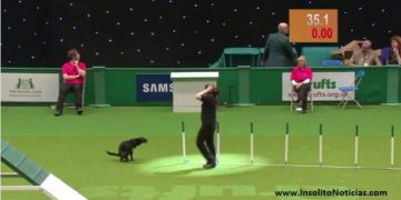 Perro Descalificado por defecar en Crufts