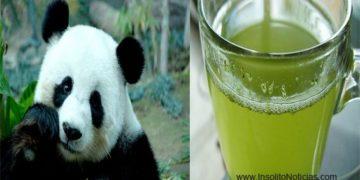 Te Verde con Excremento de Oso Panda