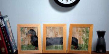 Fotgrafia perro salchicha