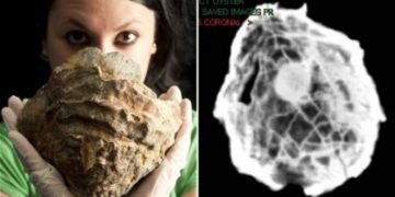 Ostra Fosil con Perla Gigante