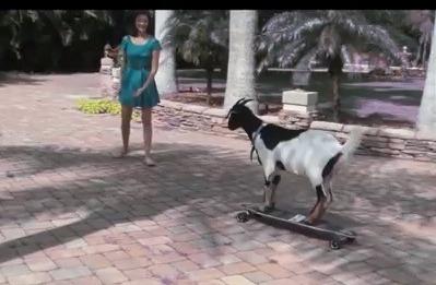 Cabra en SKATEBOARDING