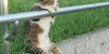 Gata se duerme sentada