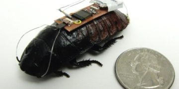 cucaracha-control-remoto