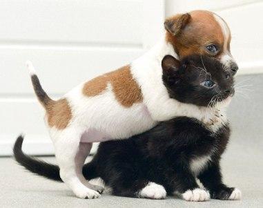 perrito y gatito abandonados piensan que son hermano