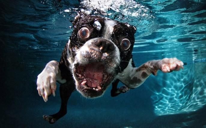 perros bajo el agua 01
