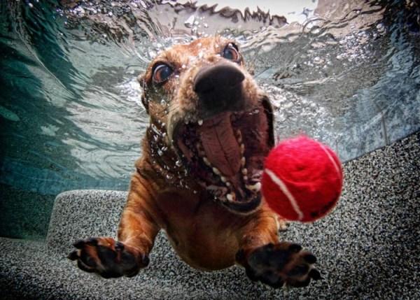 perros bajo el agua 02