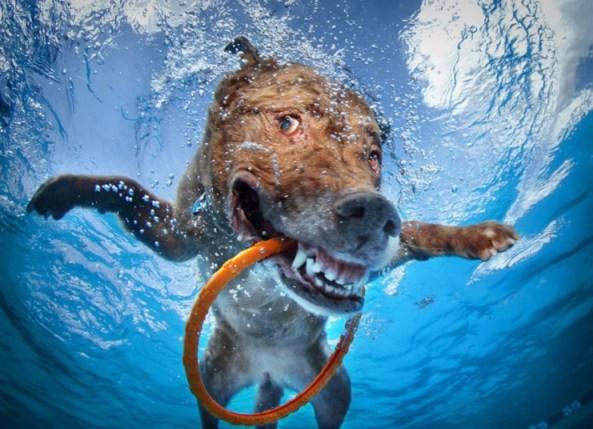 perros bajo el agua 03