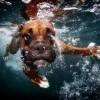 perros bajo el agua 04