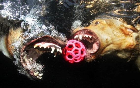 perros bajo el agua 05