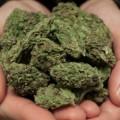 Marihuana de caridad