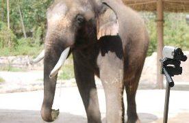 elefante habla coreano