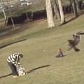 Águila arrebata a un bebe en un parque
