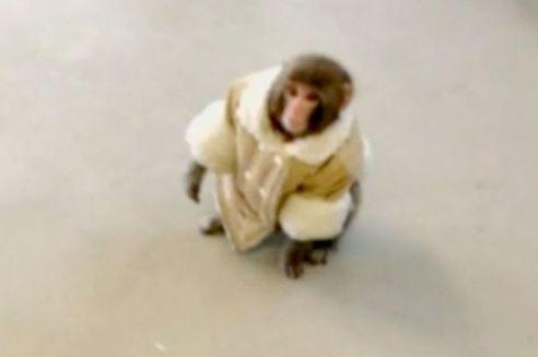 Mono en Ikea