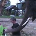 Paul Borton y elefante peter tocan piano