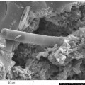 Fossil Diatoms In A New Carbonaceous Meteorite