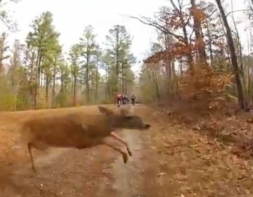 Ciervo choca a ciclista