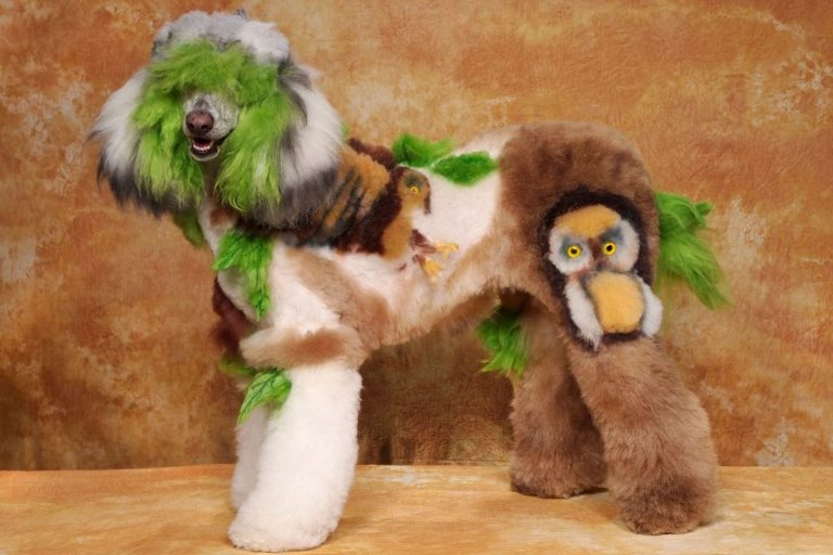 Body Art Canino - Intergroom's Creative Challenge