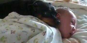 perro cuida a bebe