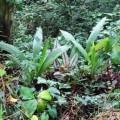 planta se mueve sola