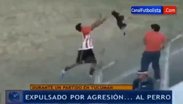 Arroja perro a la tribuna