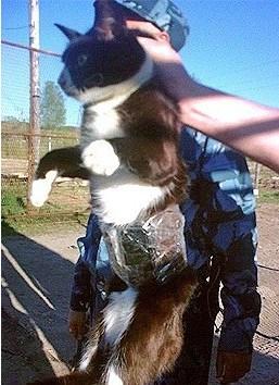 gato detenido