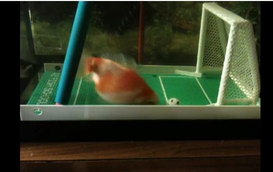 pez que hace goles