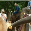 Orquesta de elefantes