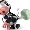 vacas y flatulencias