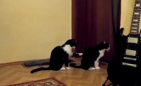 Gato pide disculpa