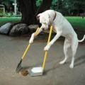 Consejos-para-entrenar-a-tu-perro-a-defecar