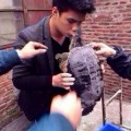 no besar tortuga