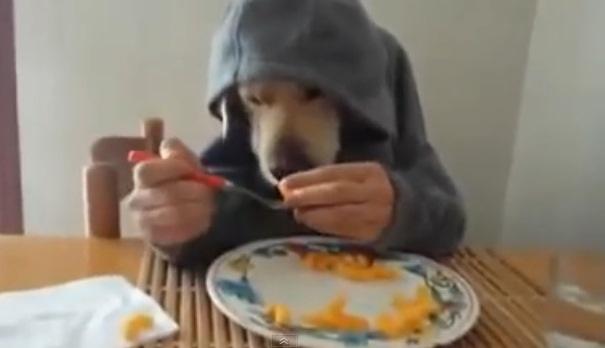 perro educado