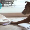 consola de juegos para perros-101