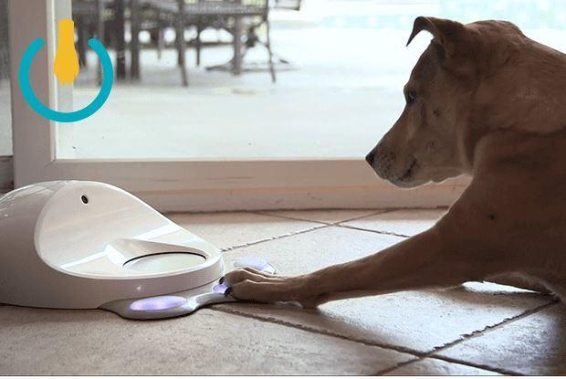 consola de juegos para perros