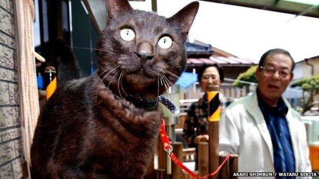 gato vuelve a casa01