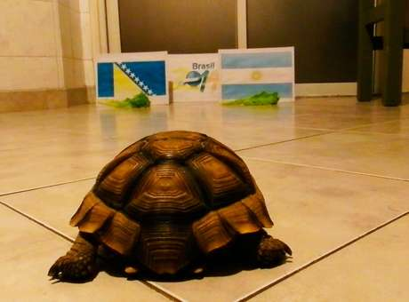 tortugaloly
