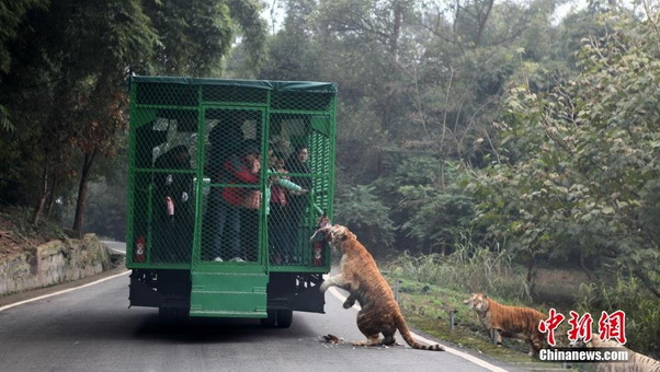 zoo china 02