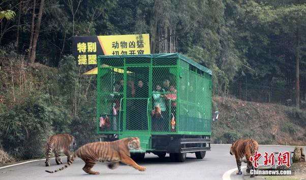 zoo china 04