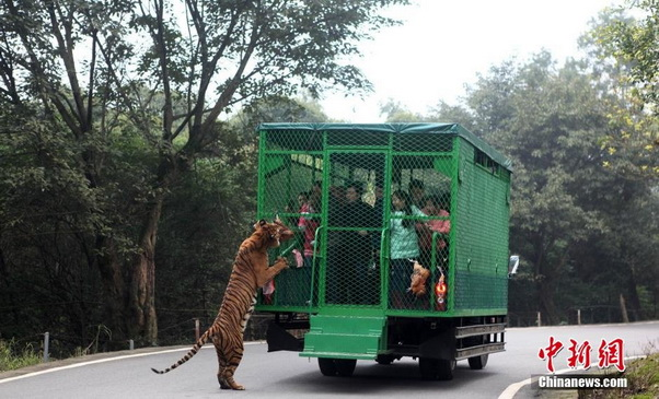 zoo china 05