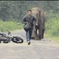 Cuidado-elefante