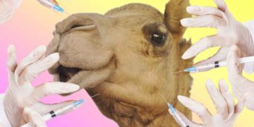 camello-botox
