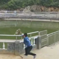 venganza-del-mono