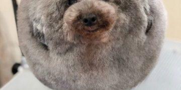 perros-fluffball-01