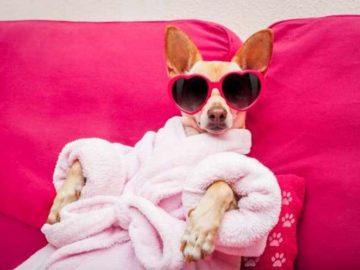 Hotel-Barkingham-para-perros