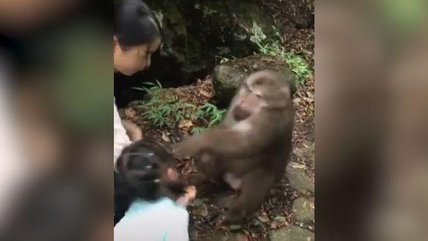 mono-niña