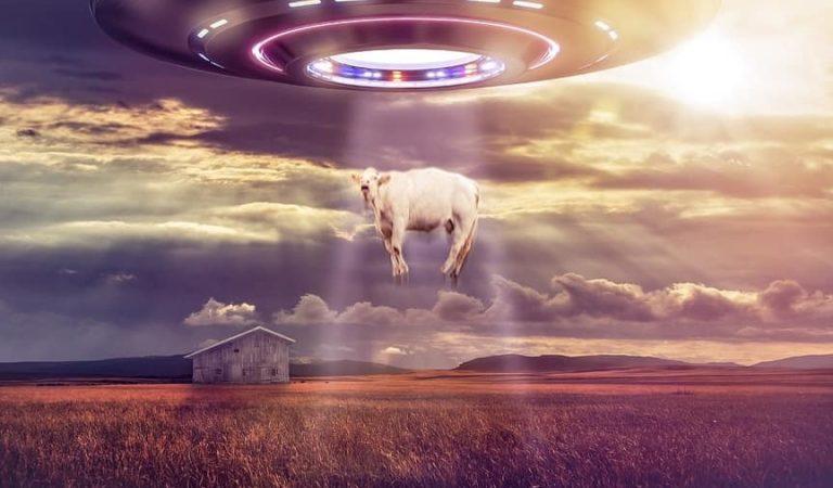 Extraterrestres con hambre: Vaca abducida por un OVNI en Argentina