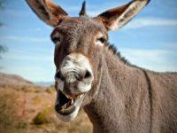 Historias-del-burro-kulo