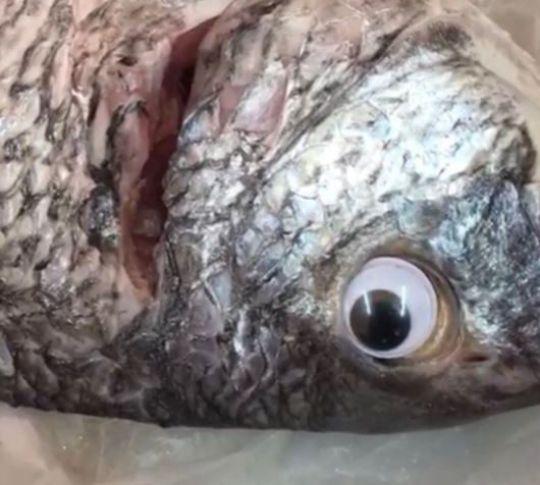 peces-adulterado