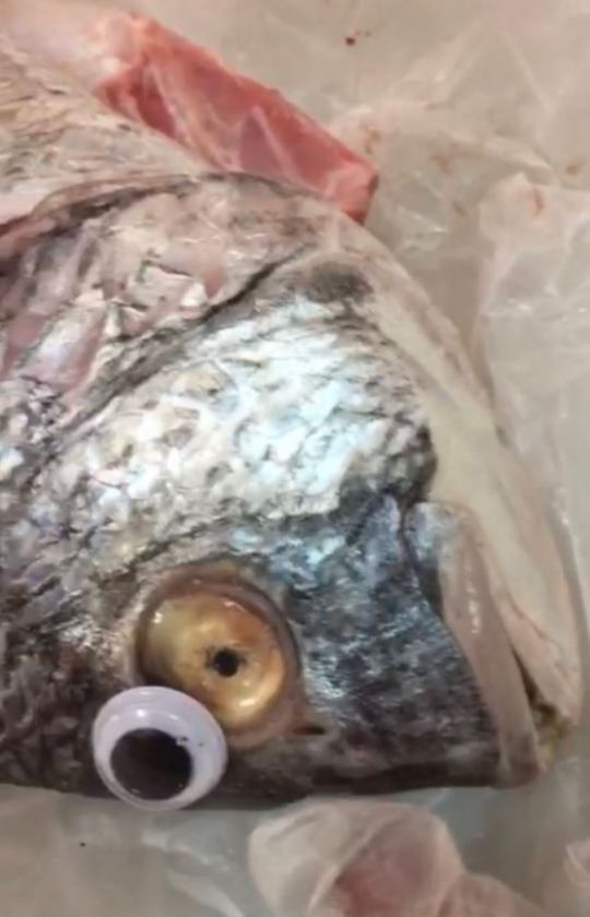 peces-adulterados