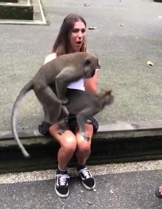 mono-macaco-cachondo